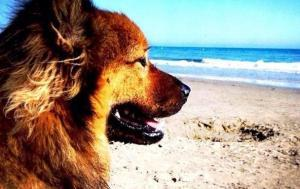 Plages pour chiens en Sardaigne