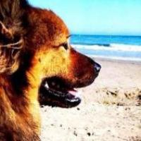 Plages chiens admis en sardaigne quelles sont les plages for Hotels qui acceptent les chiens